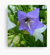 Bee-autiful flowers Canvas Print