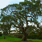 The Tree as is, Gippsland by Virginia McGowan