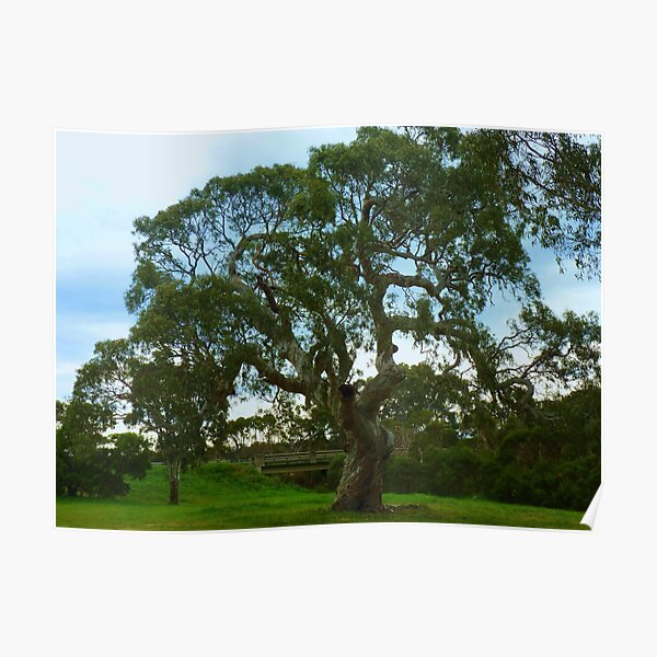 The Tree as is, Gippsland Poster