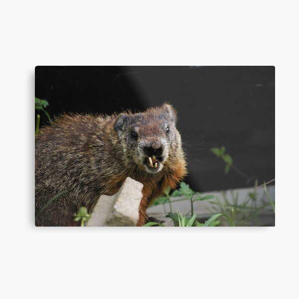 do you know a good orthodontist ? Metal Print