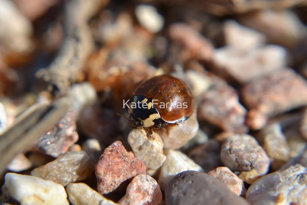 Giant ladybug at the beach by Kate Farkas