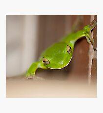 Kermit - green tree frog Photographic Print