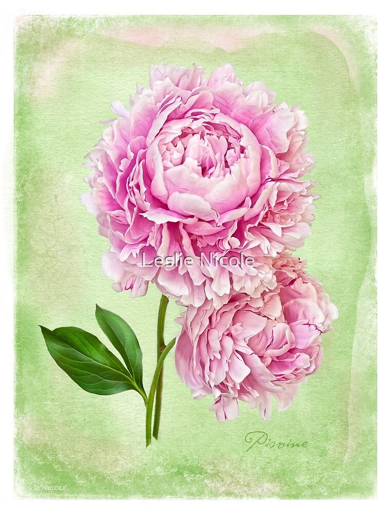 Pivoine Botanique by Leslie Nicole
