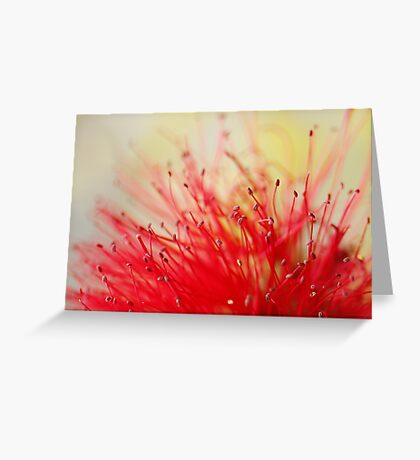 Callistemon citrinus Greeting Card