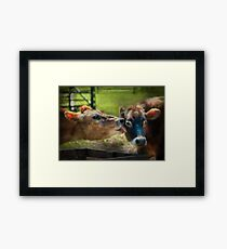 Animal - Cow - Let mommy clean that Framed Print