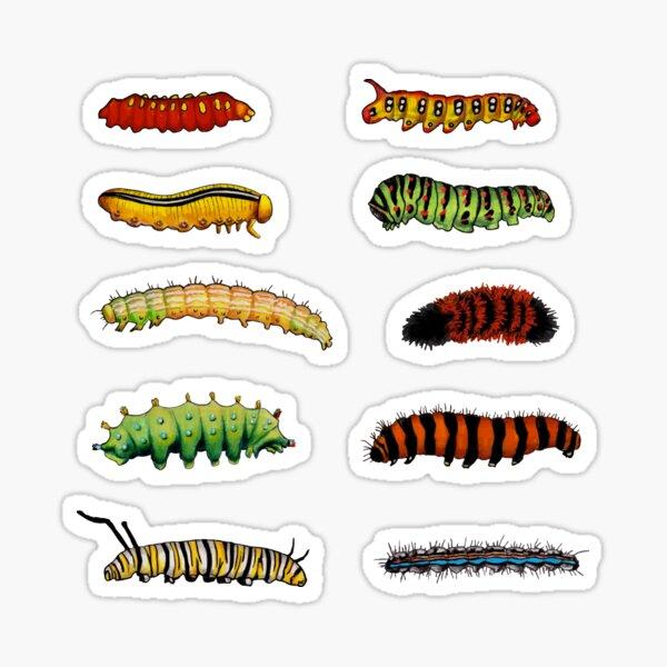 Colorful Caterpillars - Moth & Butterfly Caterpillars Sticker