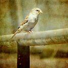 A feathered friend © by Dawn Becker
