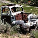 Out To Pasture - Tuscarora, Elko County, NV by Rebel Kreklow