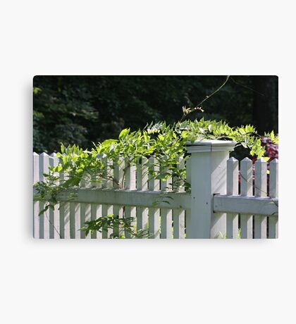 White picket fence being kissed by the sun Canvas Print