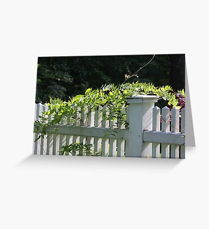 White picket fence being kissed by the sun Greeting Card