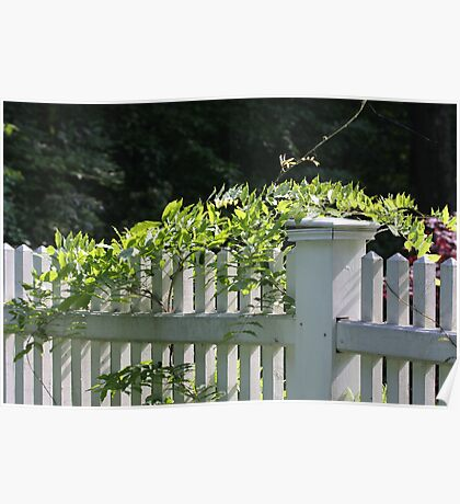 White picket fence being kissed by the sun Poster