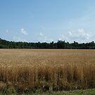 Wheat Field by WeeZie
