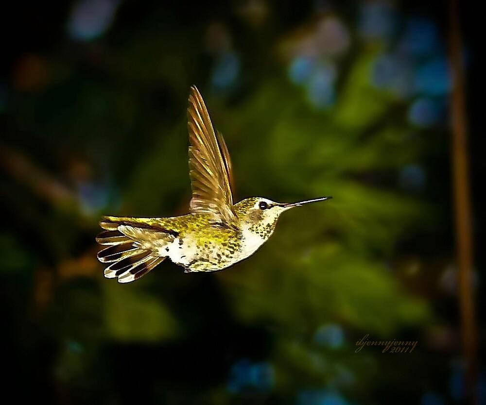 Hummingbird by ibjennyjenny