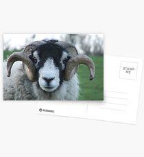Swaledale Tup Postcards