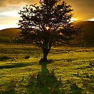 One Tree Hill by Brian Kerr
