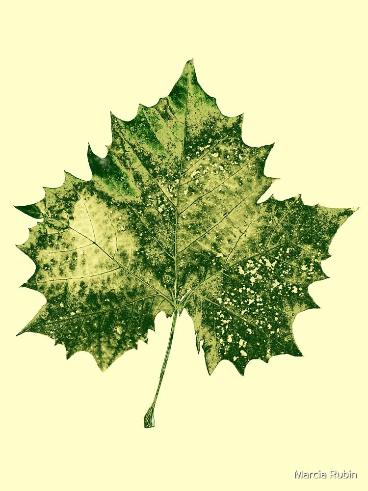 Leaf Collection 1 by Marcia Rubin