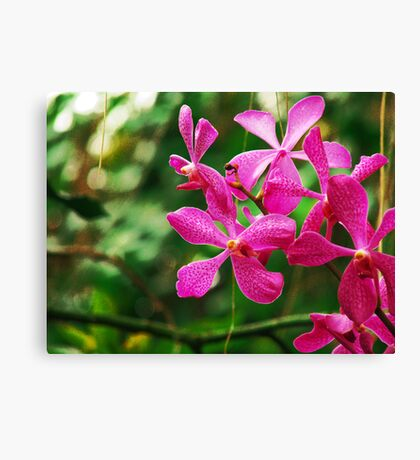 Orchid Collection - 21 Canvas Print