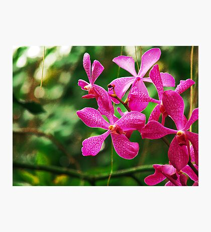 Orchid Collection - 21 Photographic Print