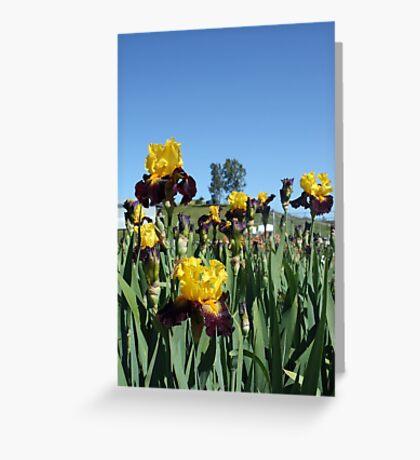 Irises at Pleasant Valley Iris Farm Greeting Card