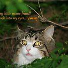 Hypnotizing Kitty! by Alexandra Wise-Brogna
