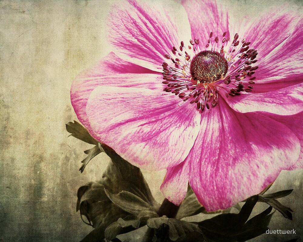 the color pink by duettwerk