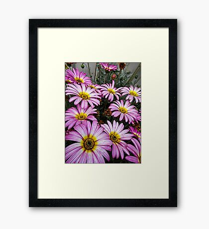 Pretty in Purple Framed Print