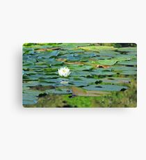 White Water Lily 1 Canvas Print