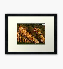 Autumn At The Vineyard Framed Print