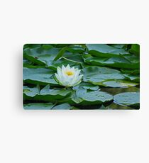 White Water Lily 2 Canvas Print