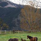 Saddle Peak Above Ponies by kayzsqrlz