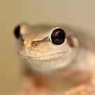 Desert Tree Frog by Steve Sass by EnviroKey