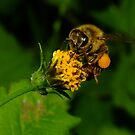 Busy Bee by Gabrielle  Lees