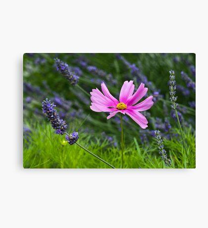 Pink on Purple Canvas Print