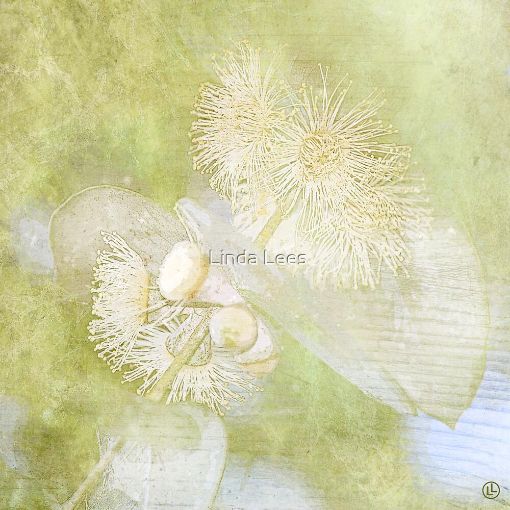 Eucalyptus cinerea by Linda Lees