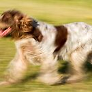 Smooth Moves Spinone by heidiannemorris