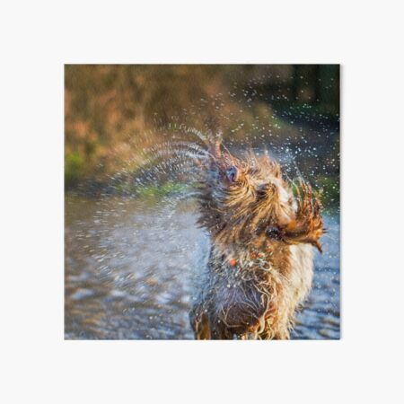 Water Fountain Spinone Art Board Print
