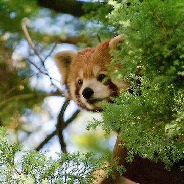 Peek A Boo by Animoia