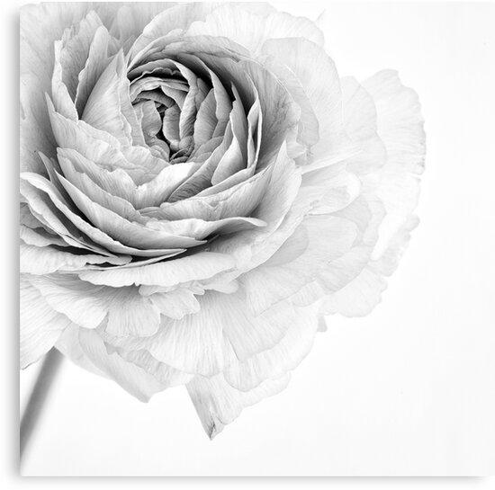 Essence by Priska Wettstein