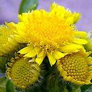 Weed Flower by PatChristensen