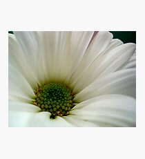 DAISY - Macro ^ Photographic Print