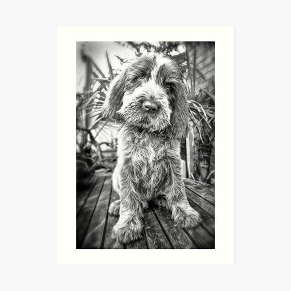 Sitting puppy Spinone Art Print
