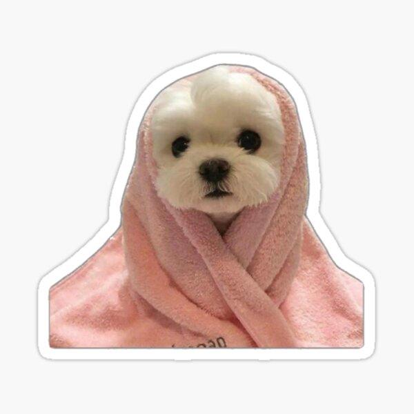 White Dog in Pink Blanket Sticker Sticker