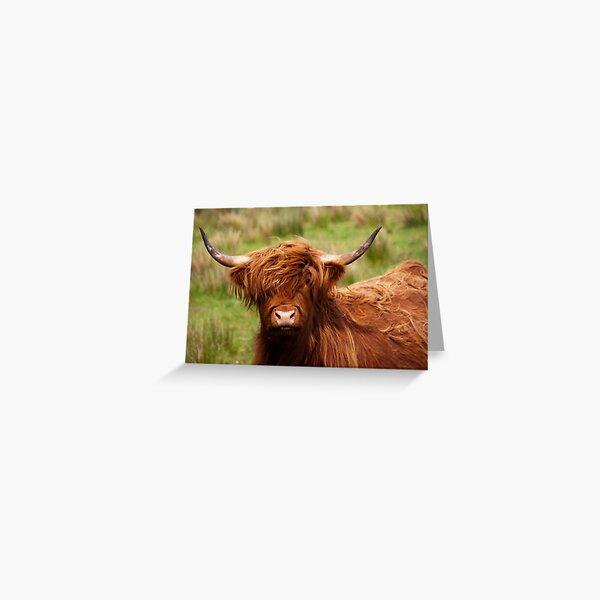 """Highland COW White Calf 7x5/"""" Carte de Vœux vide pour votre propre message"""