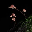 Mycena? by Colin12