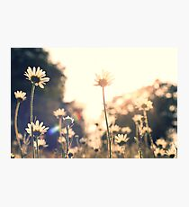 Summer fields and flowers Photographic Print