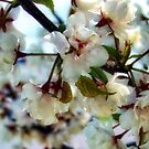 Apple Blossoms by rocamiadesign