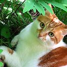 Tori in the Fern Garden by Stephen D. Miller