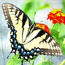 Butterfly Art by vasu