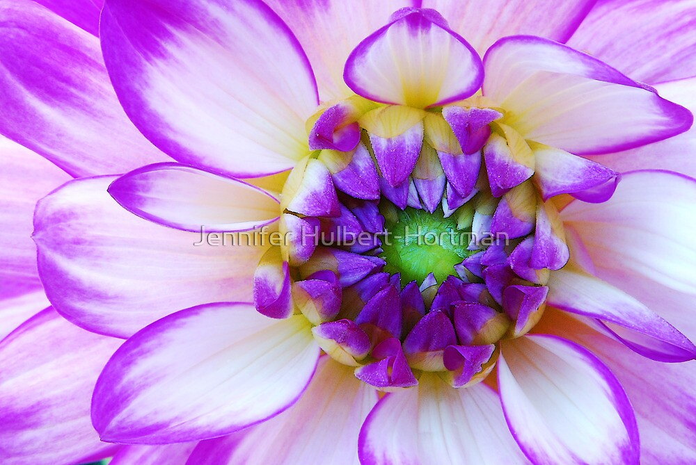 The Center of Attention by Jennifer Hulbert-Hortman