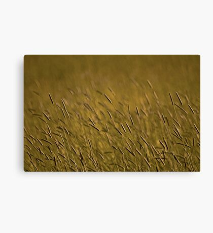 Rye Grass Canvas Print